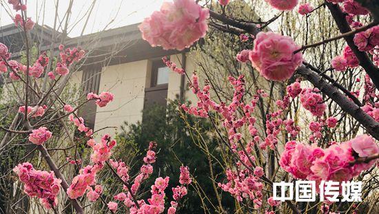 """2020""""售楼处的春天""""——北京海晏春秋"""
