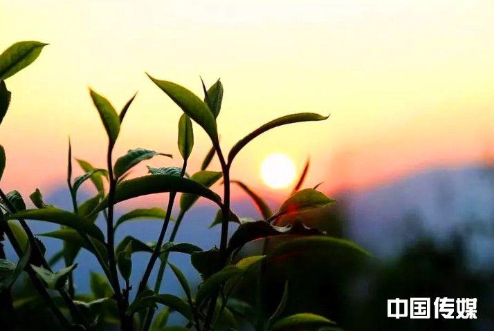 云南普洱茶投资集团以新技术推动茶产业健康发展