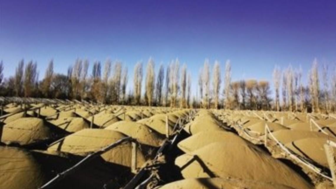 有关方面公布关于甘肃省敦煌阳关林场防护林被毁有关问题的调查情况
